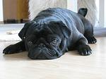 dog-123722_150[1]